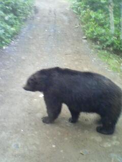 をぉ!熊と遭遇!